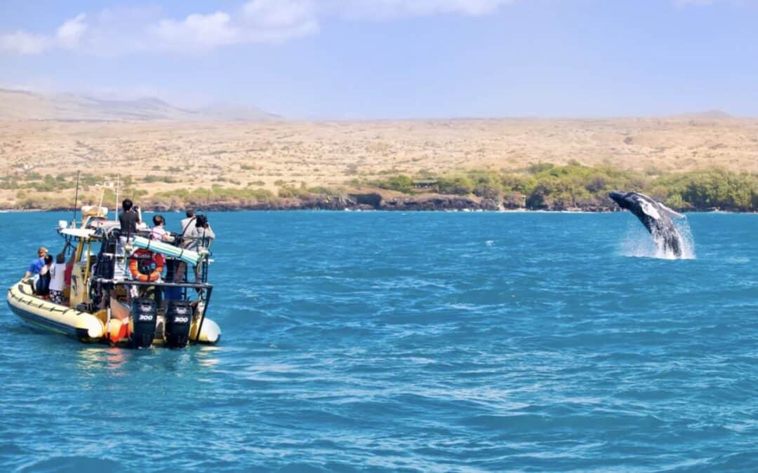 The Best Whale Watching Tour from Puako Bay, Big Island