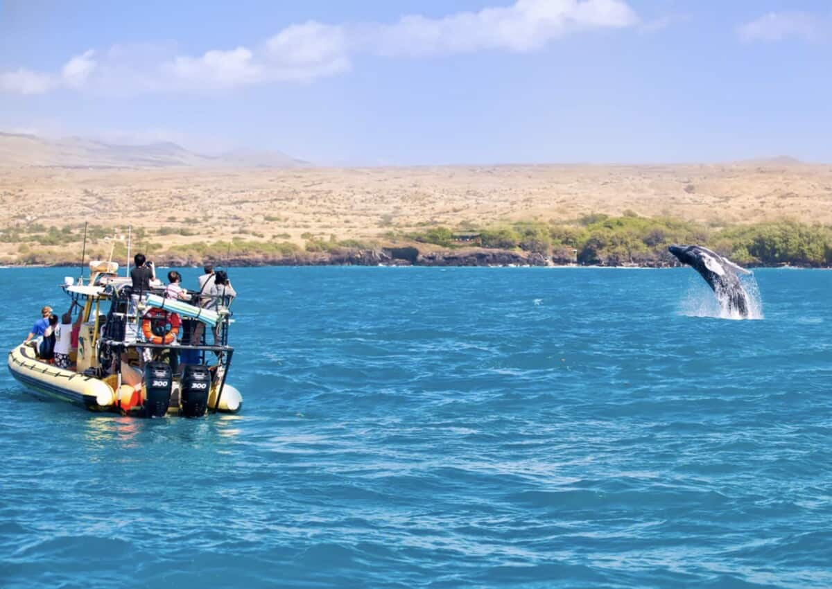 Big Island Hawaii best whale watching tour kohala resorts
