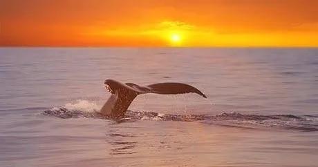 Whale Watching Adventure from Kailua-Kona, Hawaii