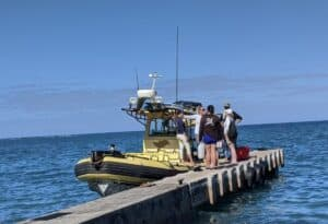 Whale watching kohala coast resorts Adventure X Boats
