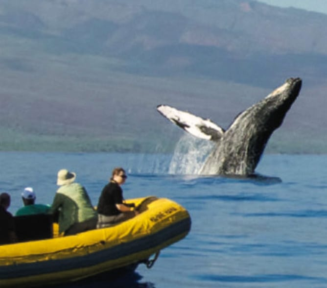 best maui whale watching tour