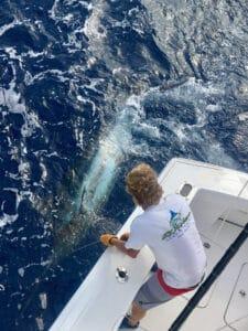 kailua kona hawaii sport fishing trips