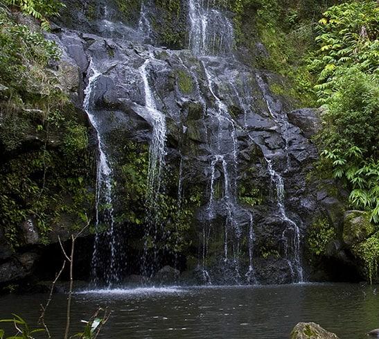kohala waterfall hike Hawaii forest and trail-2