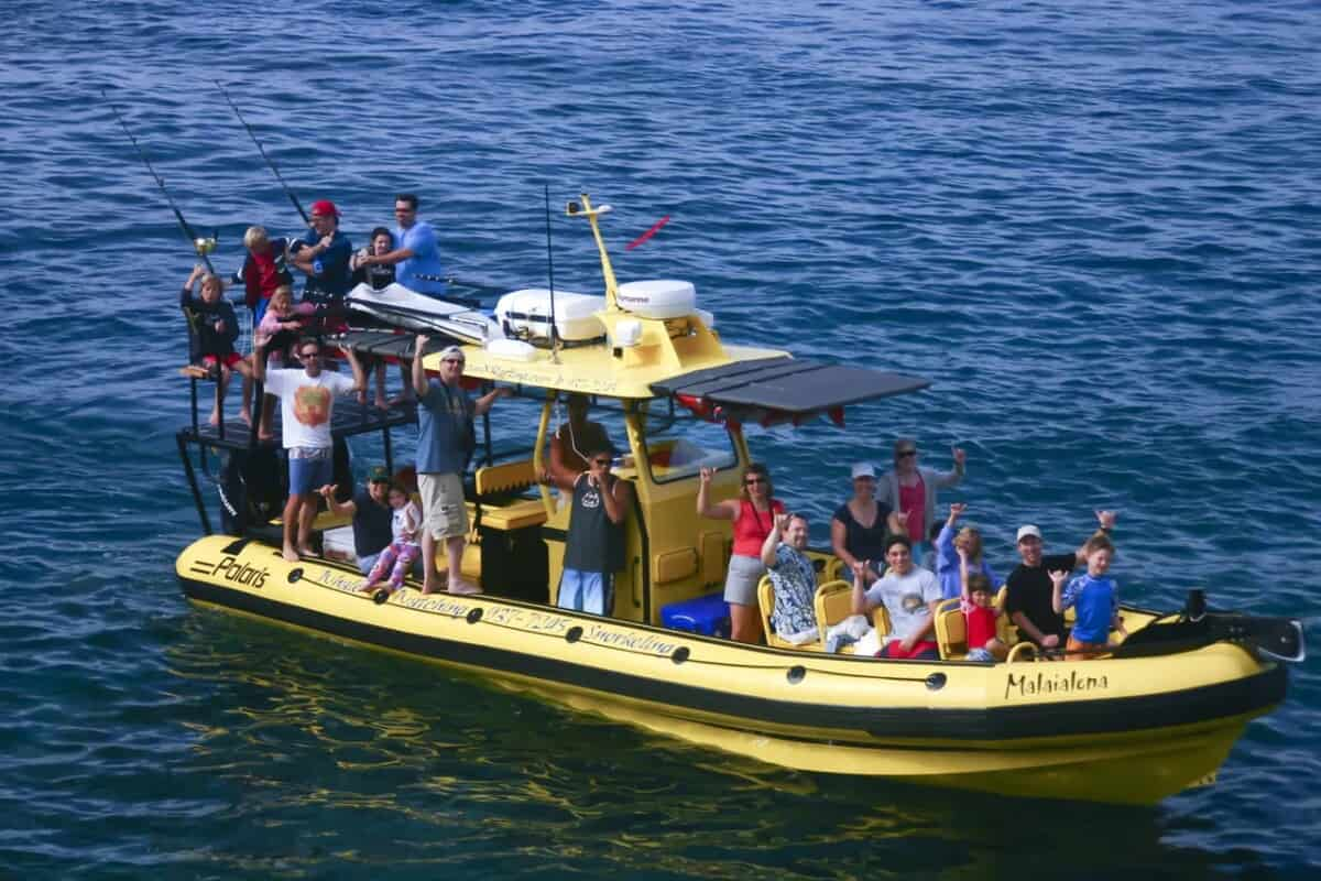 whale watching kohala coast adventure X Boat